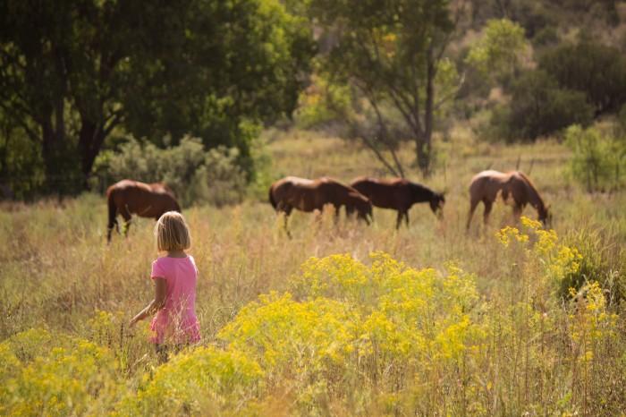 Mia with horses.jpg