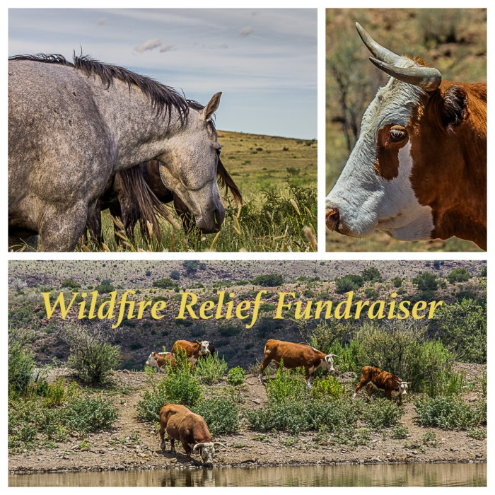 Wildfire Relief Fundraiser